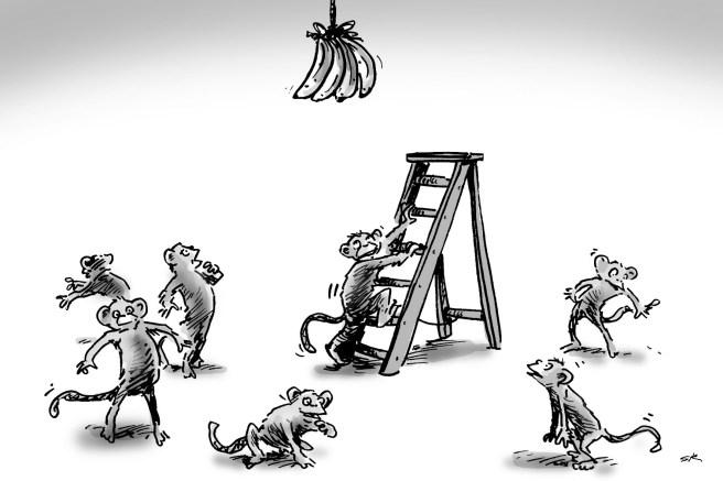 scimmie e scala