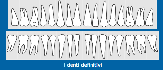 denti definitivi