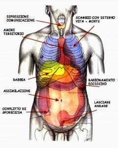 linguaggio degli organi