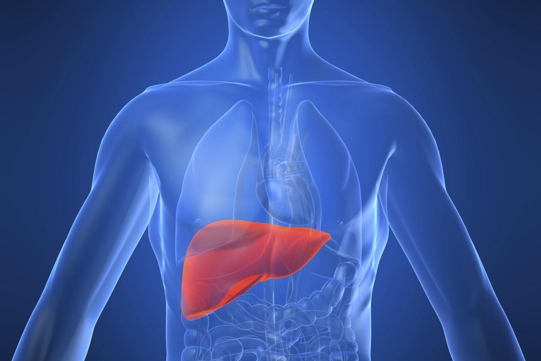 Liver Location Pain Liver Transplant ~ Elsavadorla
