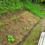 Gli orti senza bisogno di irrigazione (Hugelkultur o Collin-Orto)